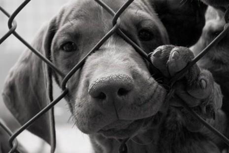 Senado aprova pena de até 5 anos, para maus-tratos contra cães ou gatos