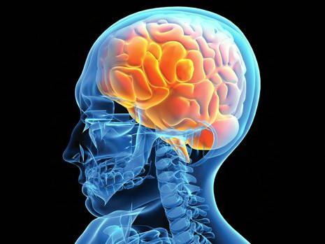 Pesquisadores da UFPB desvendam assimetria entre os dois lados do Cérebro