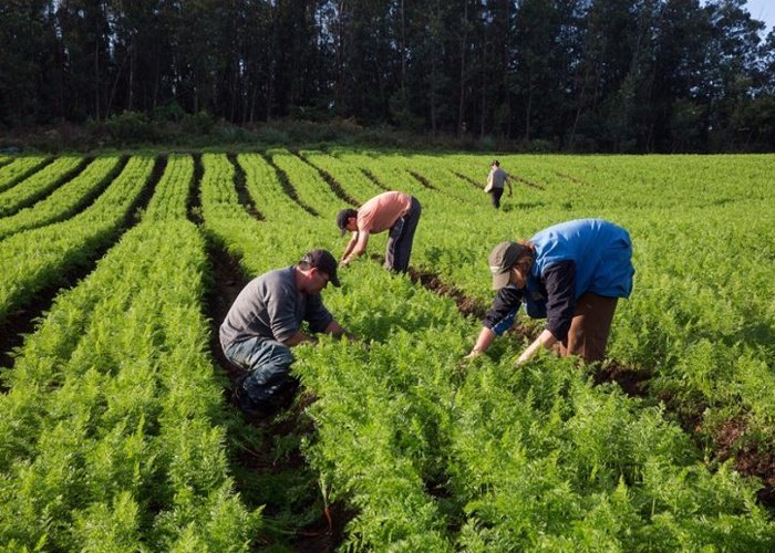 Cerca de R$ 80 milhões jaá foram aplicados na agricultura familiar este ano, diz Conab