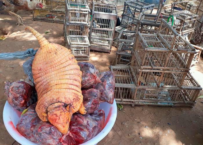 Ibama apreende 572 animais silvestres em operação no Sertão da Paraíba