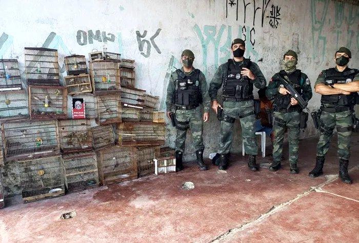Polícia apreende mais de 50 aves silvestres e combate o tráfico de animais na Paraíba