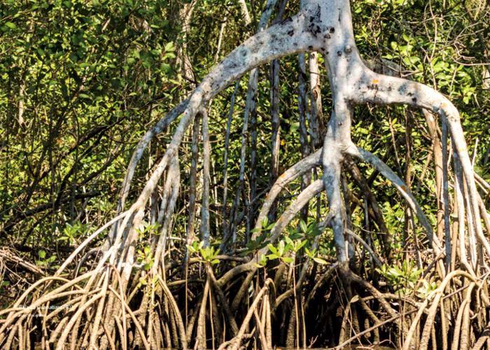 Conama revoga normas que restringiam desmatamento em manguezais e restingas