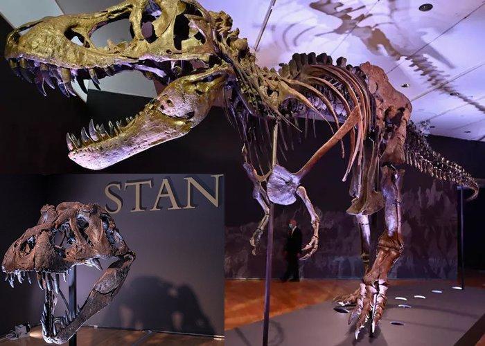 Dinossauro T-Rex em leilão em Nova York pode render $ 8 milhões de dólares